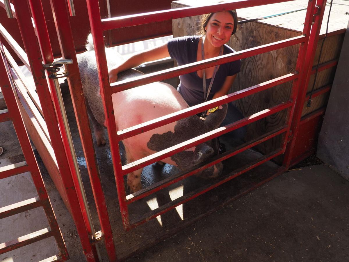 FFA students ready their animals for county fair