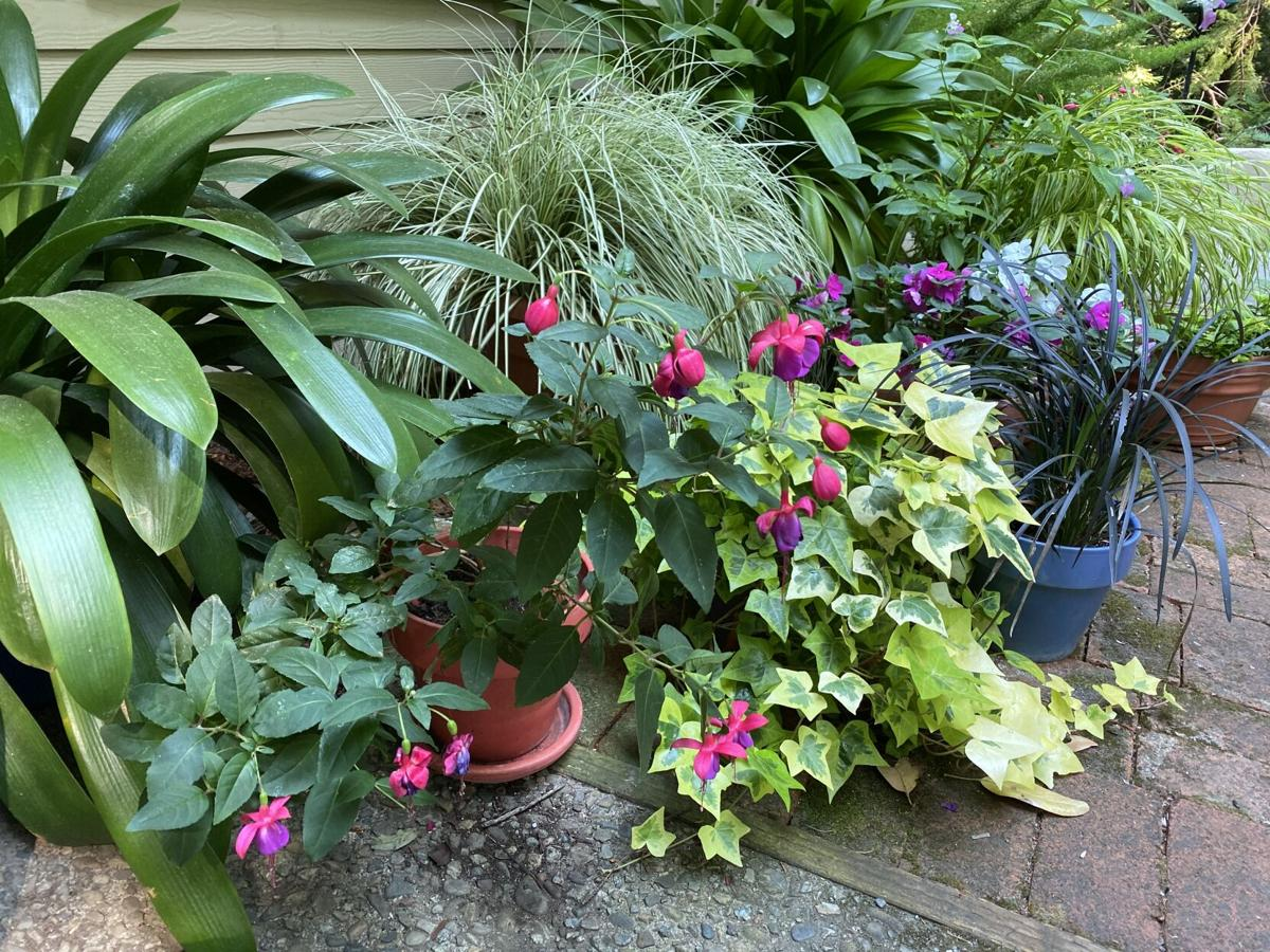 This container grouping for shade has just one type of plant per pot.