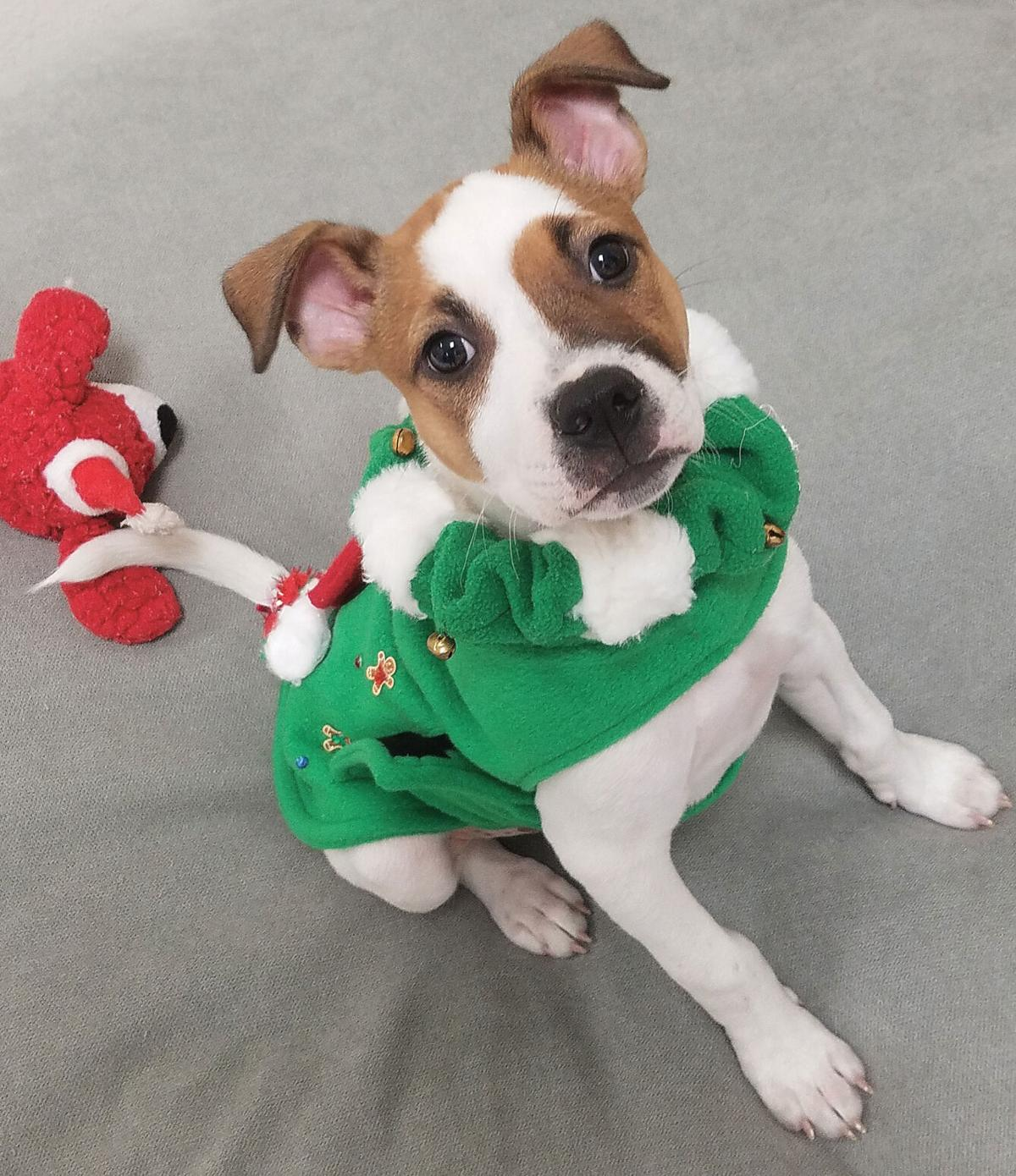 Ugly Pet Sweater contest