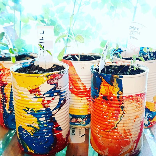 Kitchen Herb Sprouts Upcycled Cans