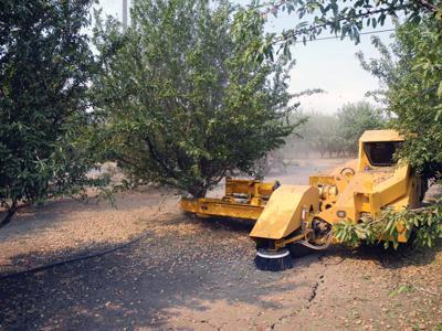Almond harvest 2020