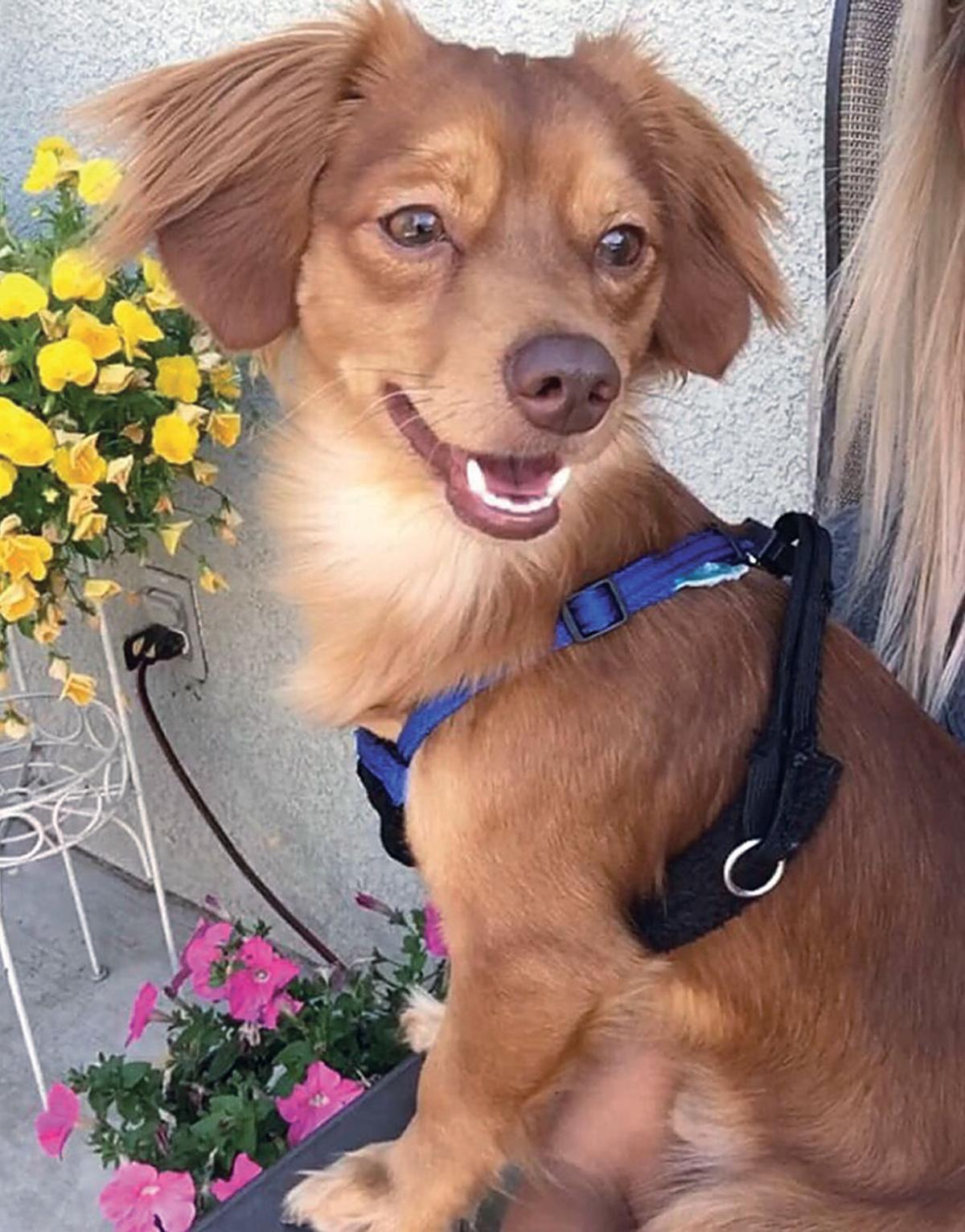 Butterscotch at Animal Rescue of Tracy