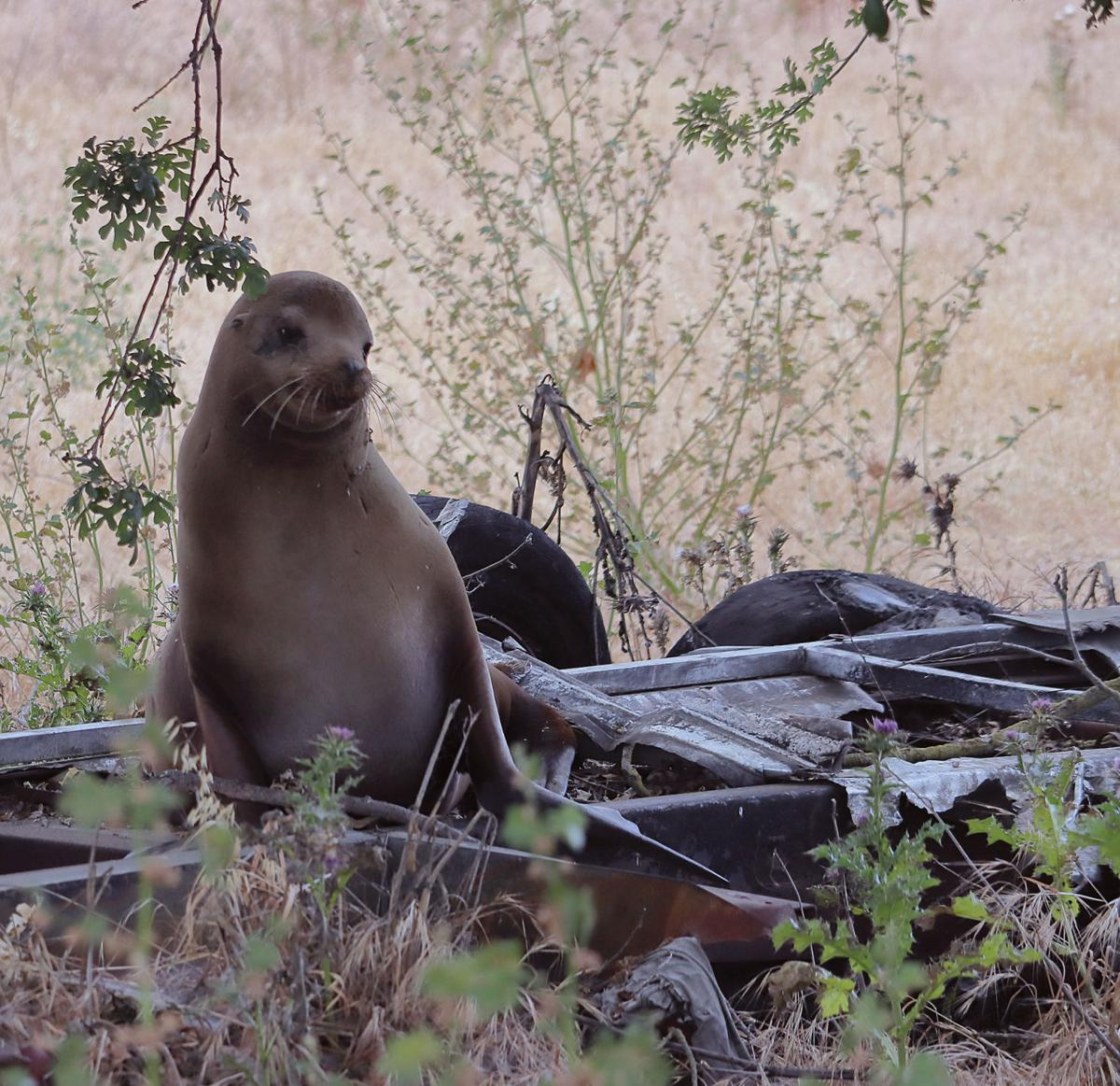 Sea lion rescued