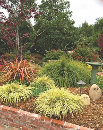 GREEN FEEL In addition to true grasses plants like lomandra and phormium are beautiful year round. — contributed