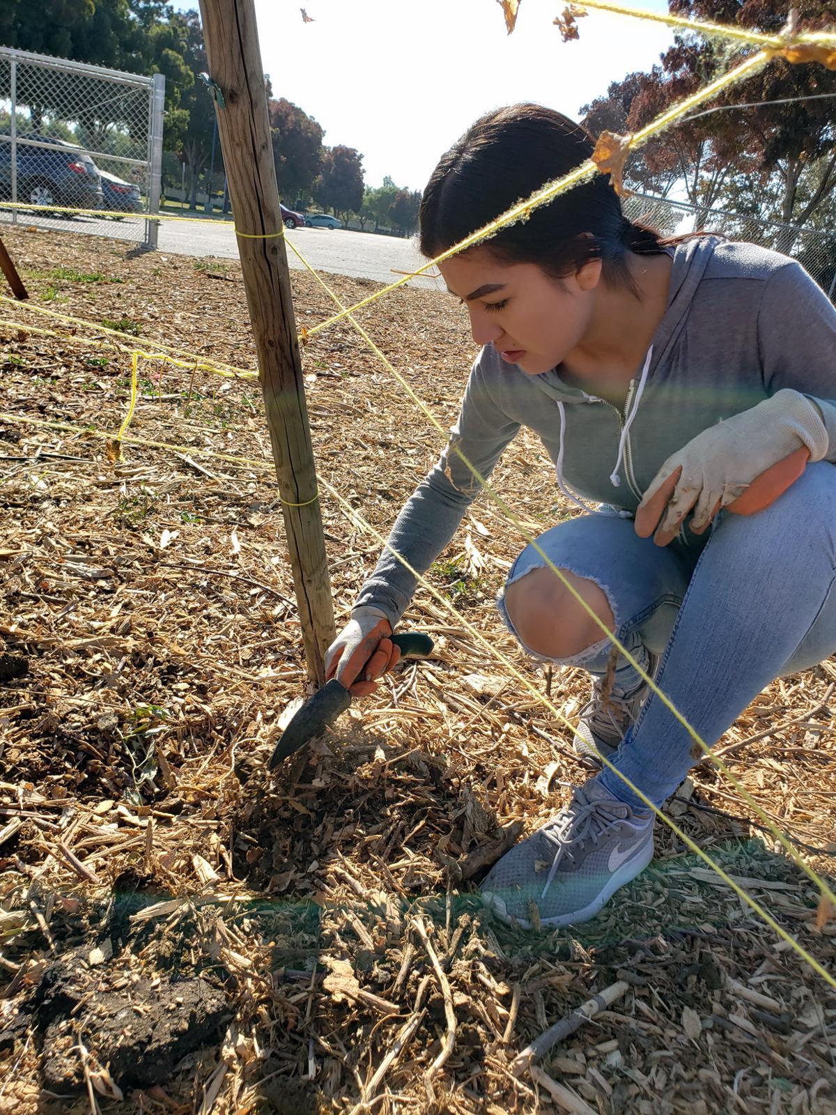 Creekside Middle School Garden Day