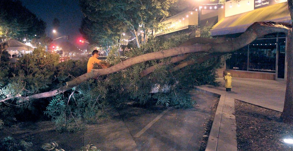 Trees fall on 10th Street