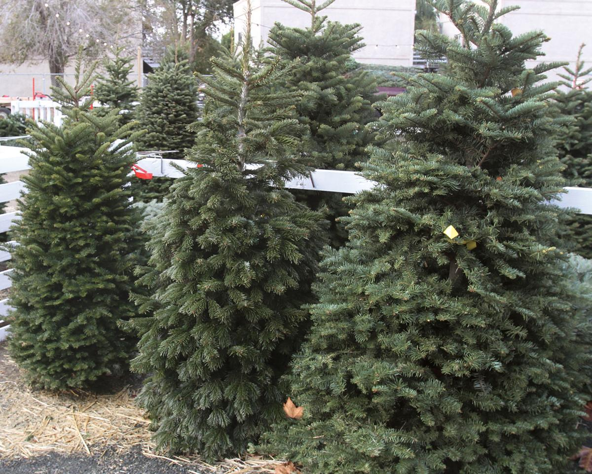 New tree lot opens in downtown | Tracy
