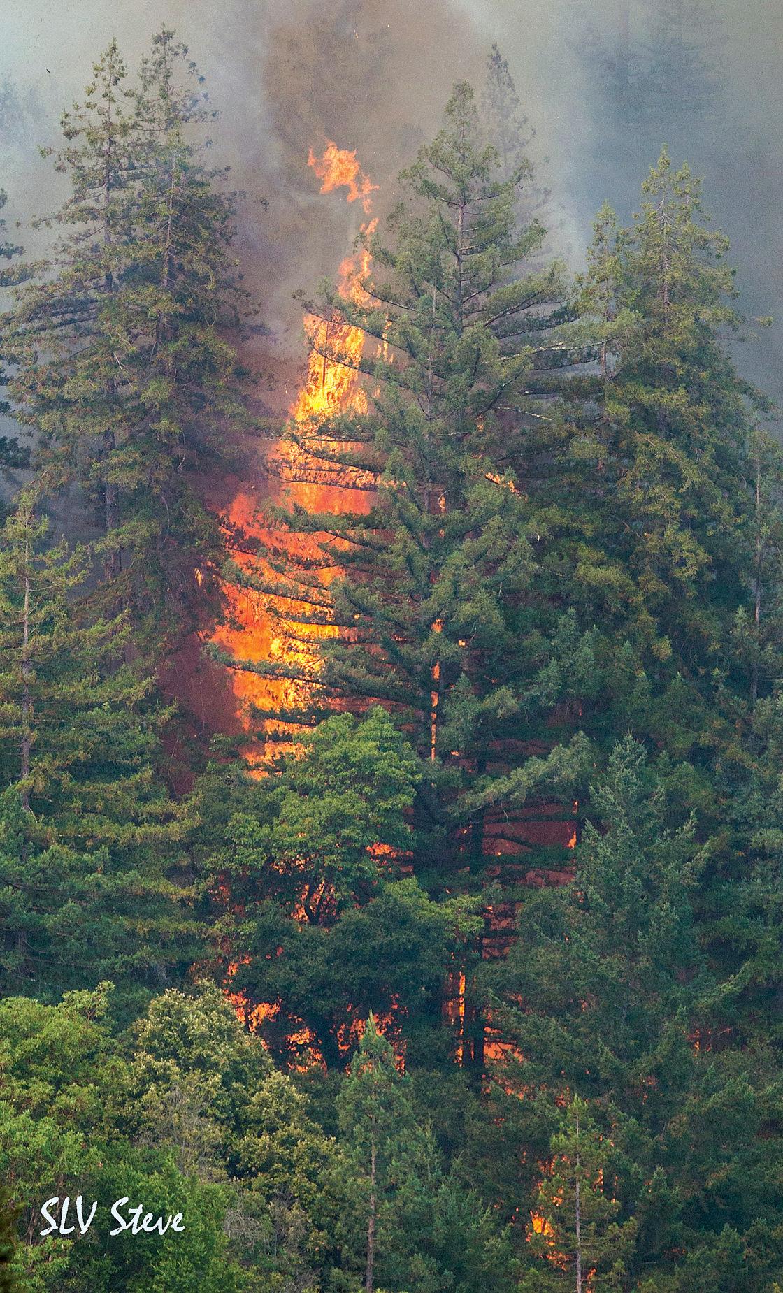 bear fire (26).jpg