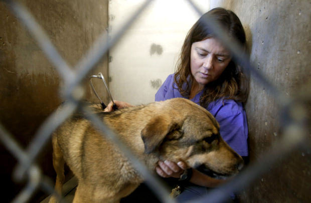 Pima Animal Care Center veterinarian