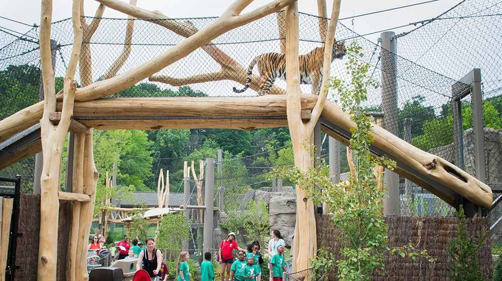 Tiger exhibit