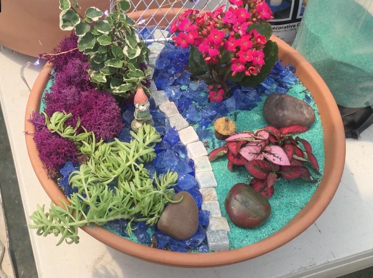 Dish garden from Green Things Nursery