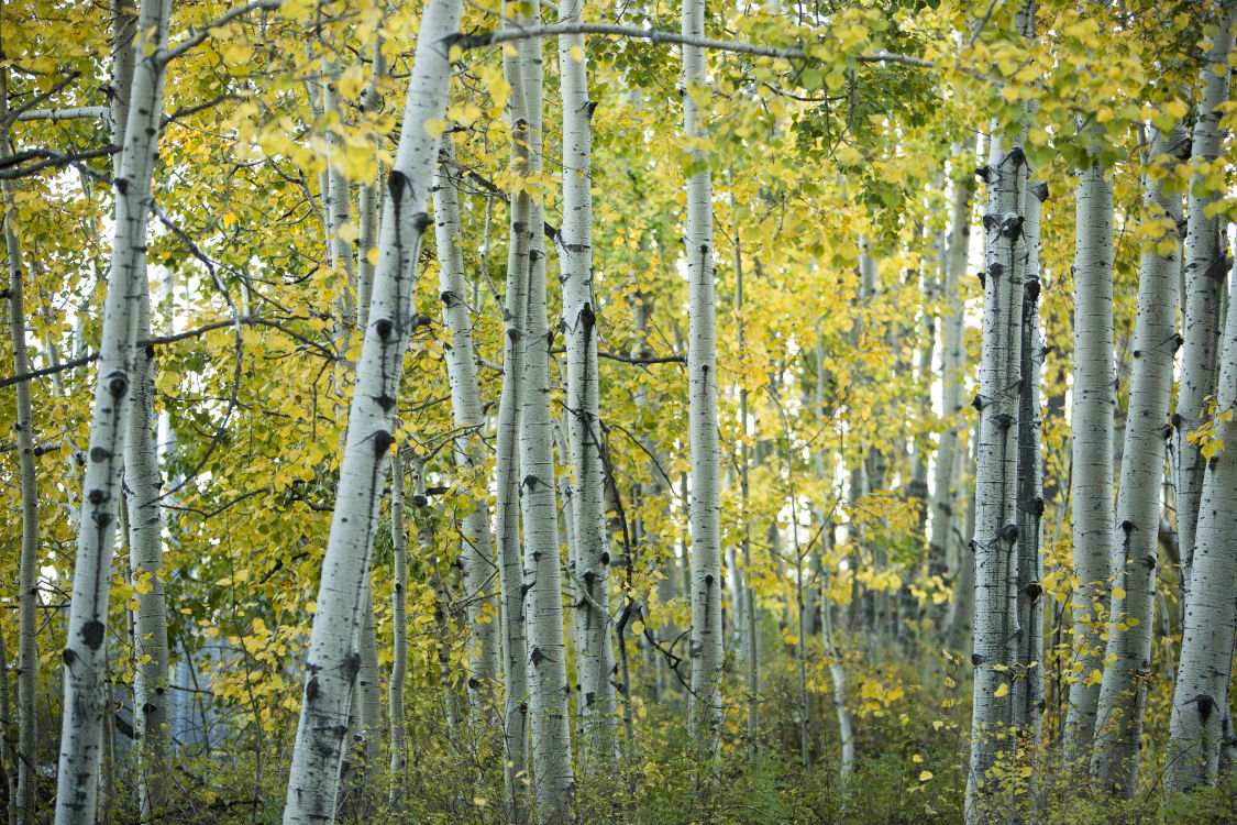 Photos: Fall foliage in Southern Arizona   Outdoors and Events ...