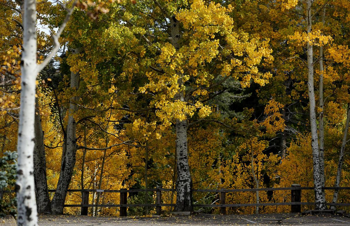 Fall colors on Mount Lemmon