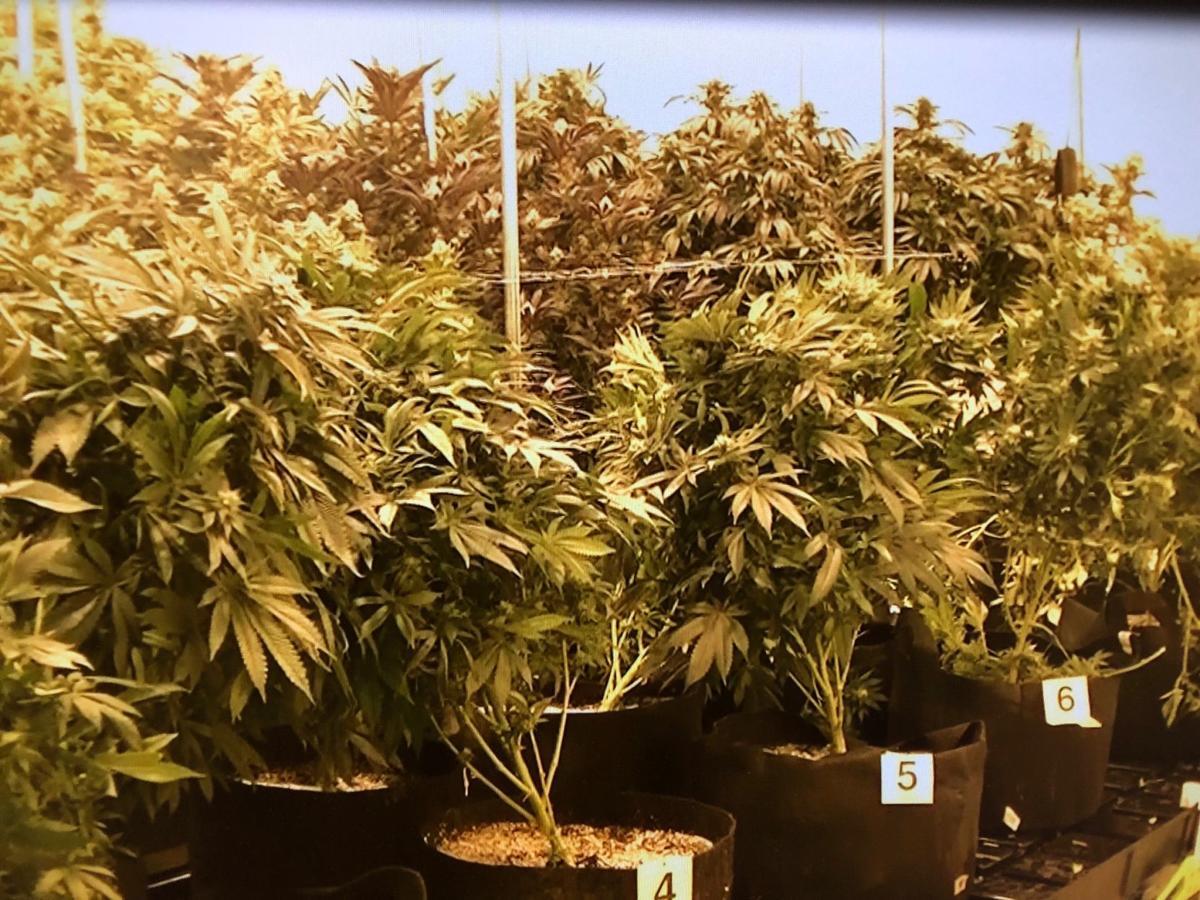 Deputies seize estimated $325K worth of marijuana at Tucson