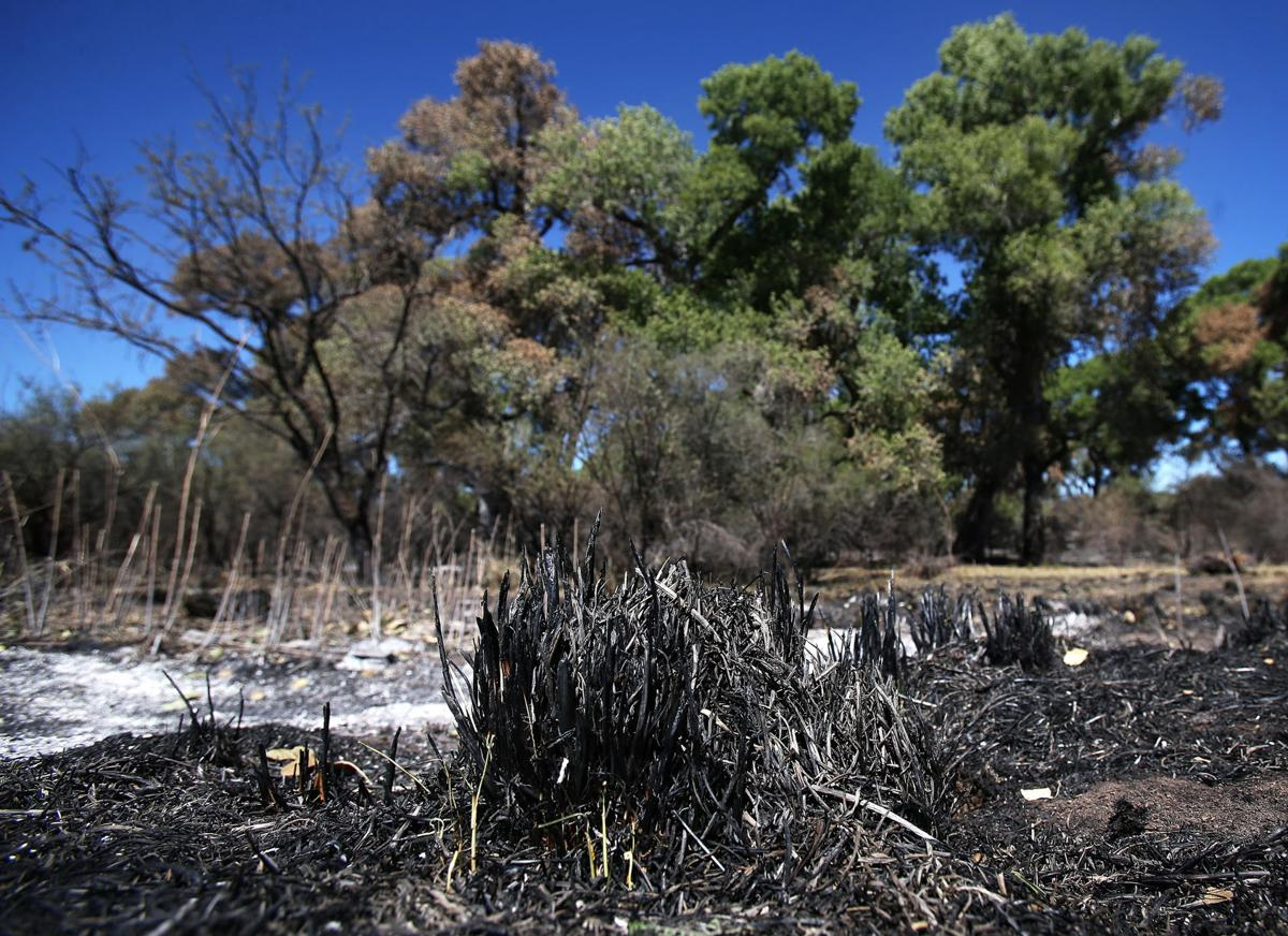 Fire damage to Empire Ranch riparian area