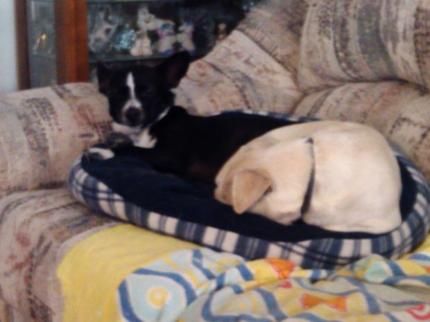 Rescue Stories: Boo and Buster