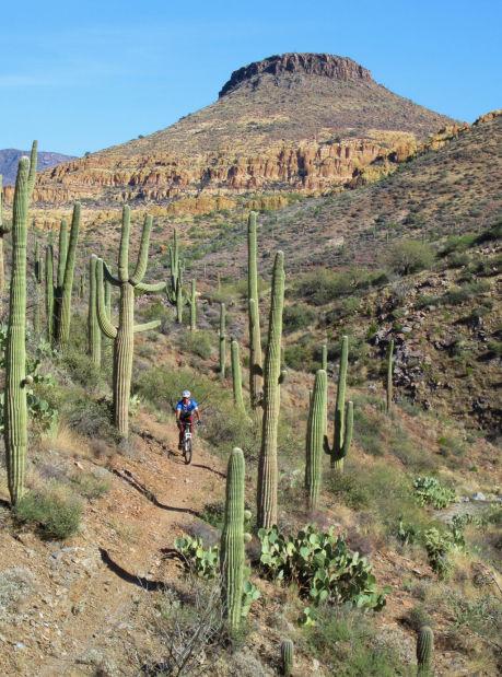 Mountain biker on Arizona Trail