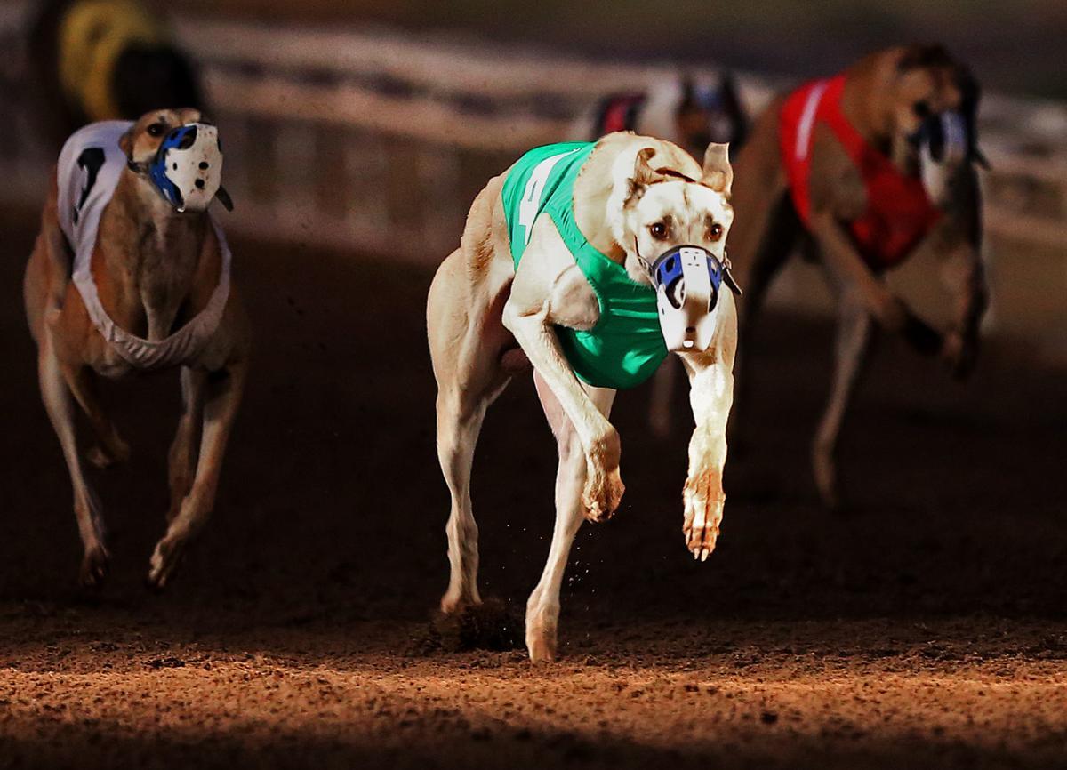 Last race at Tucson Greyhound Park
