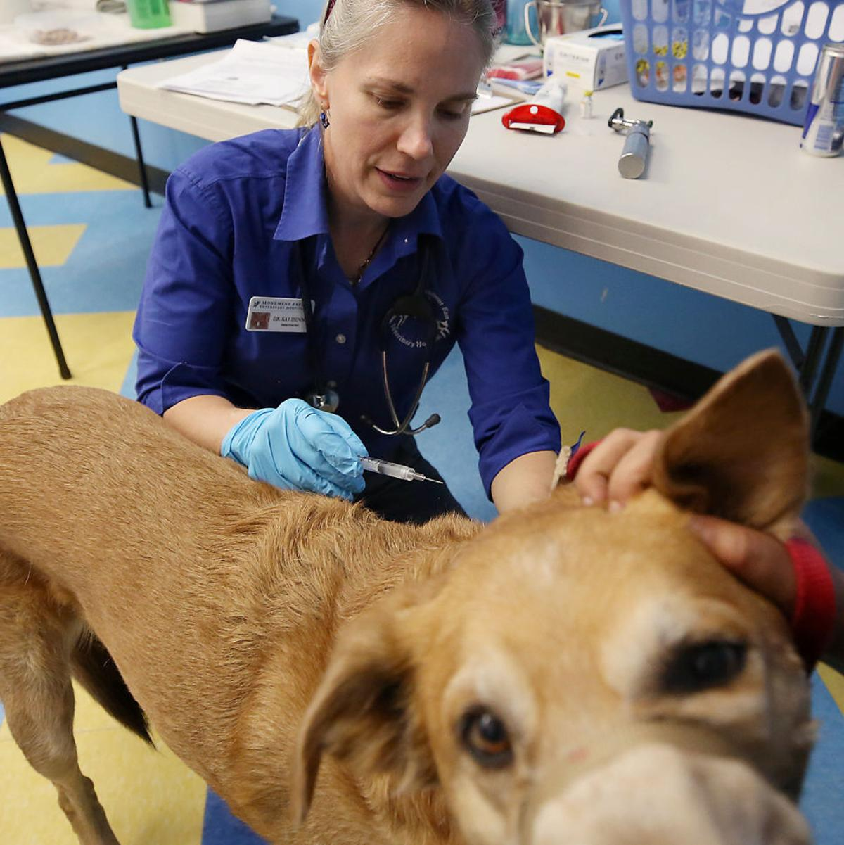 Contagious disease that can spread to humans sickens Tucson dogs