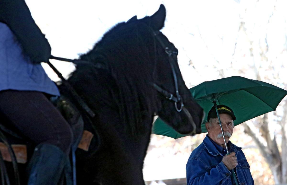 Desensitizing horses