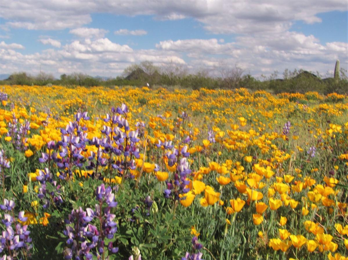 Vast carpets of wildflowers