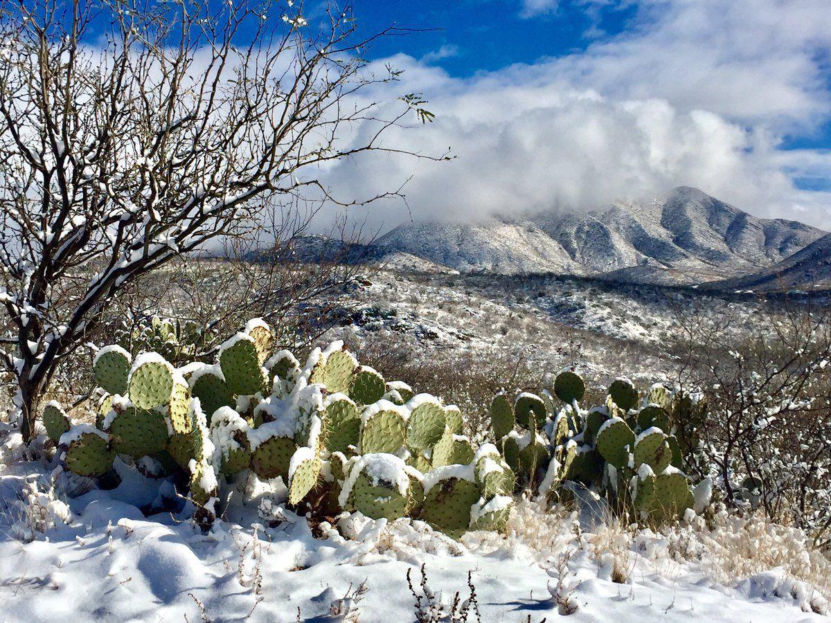 80 beautiful photos of snow in Southern Arizona | Local news ...