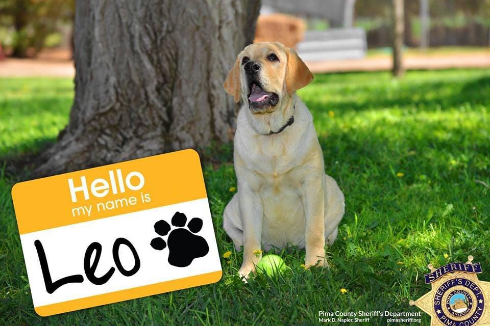 Leo the dog