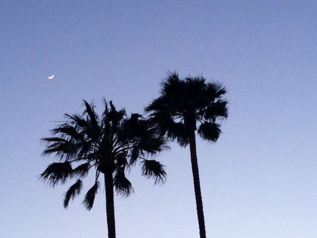 Twilight, two palms and a sliver of moon