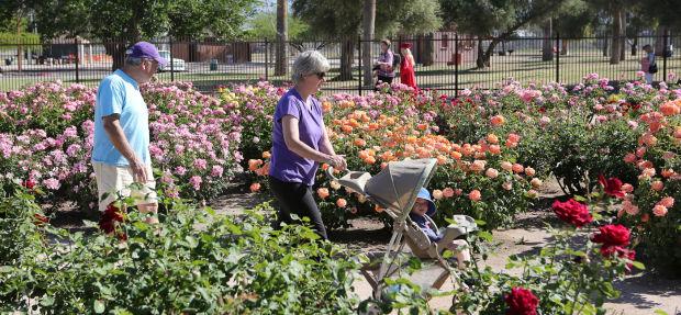 Reid Park Rose Garden