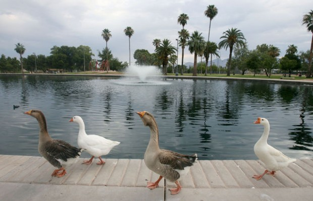 Reid or Randolph park? Depends on which Tucsonan you ask (w/slide show)