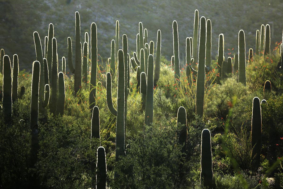 xxxxxx-Saguaro National Park West-p5