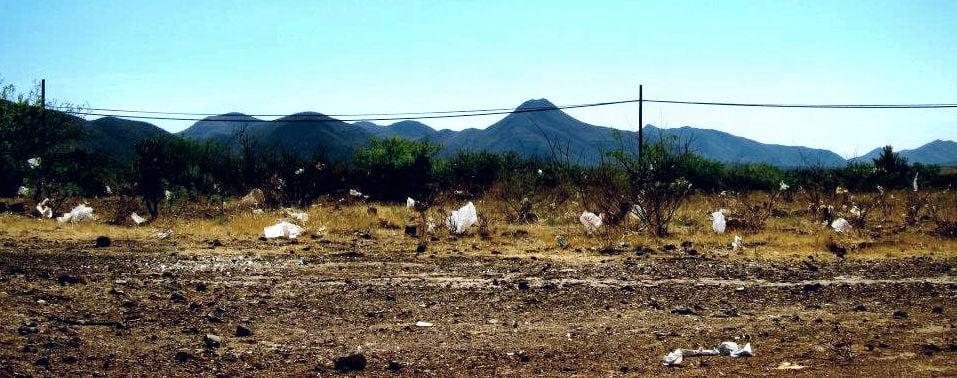 Bisbee plastic bags