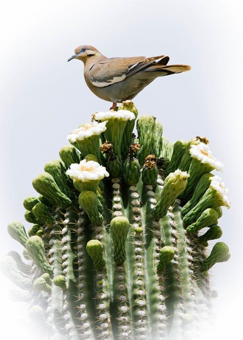 dove-1-1-of-1-.jpg
