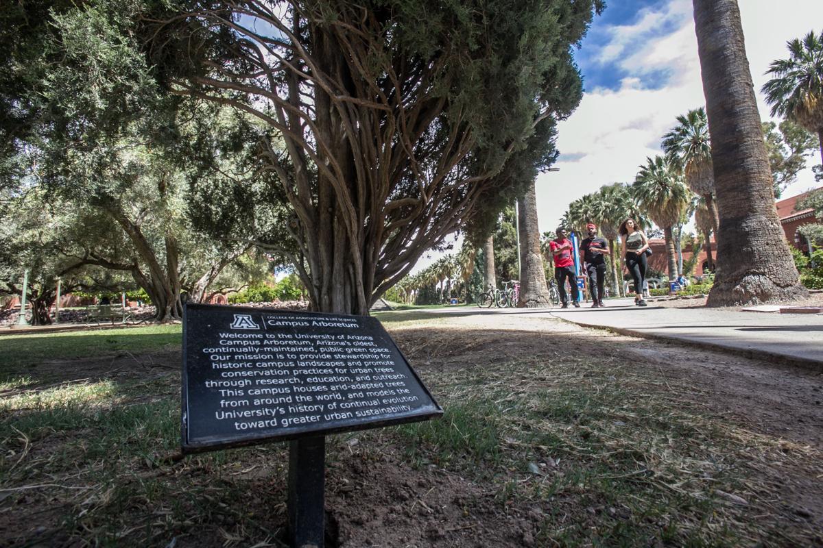 UA Arboretum