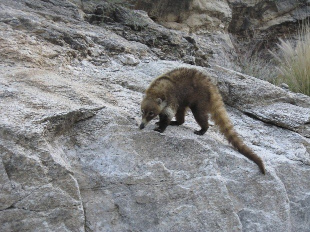 Seen a creature like this? In Catalinas, you just may