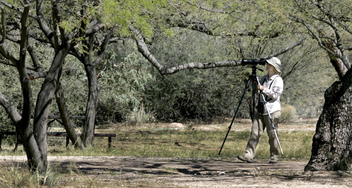 Birding Agua Caliente Park: Roy P. Drachman-Agua Caliente Regional Park