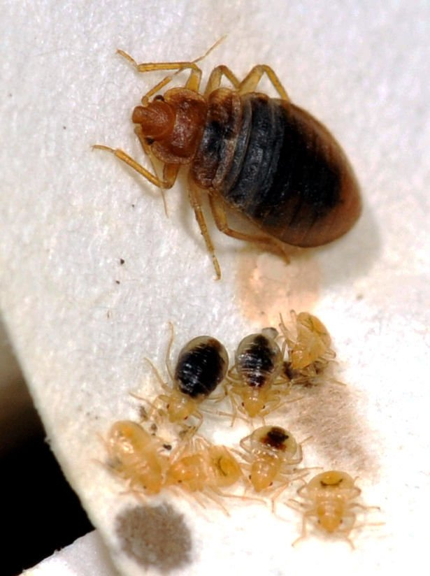 Bed Bugs Crawling On Our Desks At Tucson Call Center