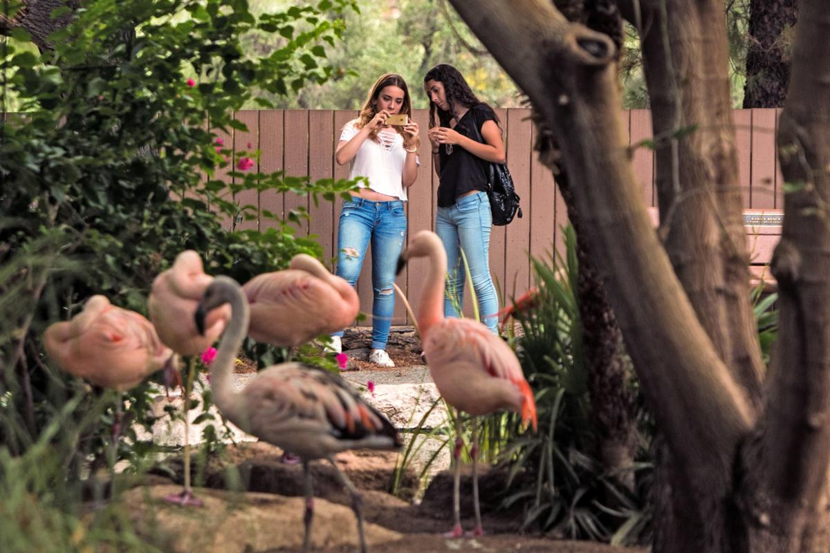 Tucson Parks And Rec Summer 2020.Flamingos Are The Inspiration For This Year S Zoocson