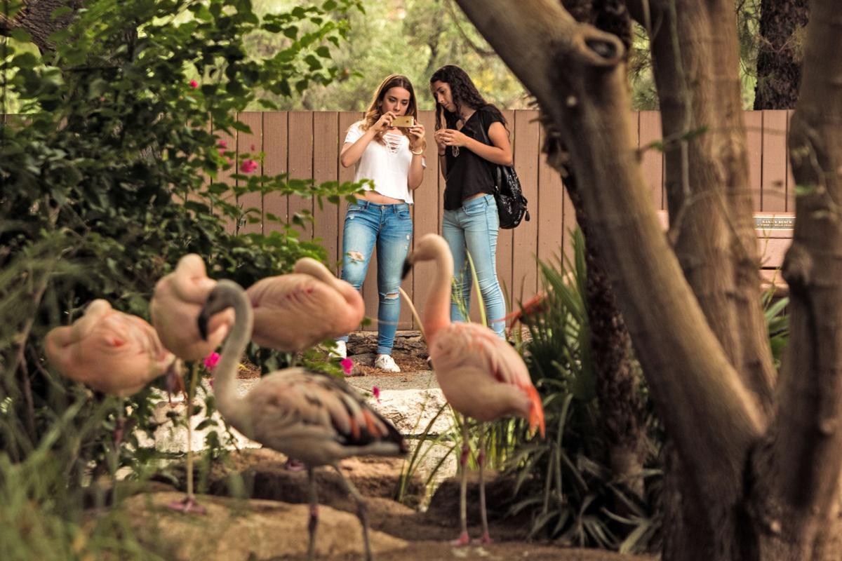 Reid Park Zoo (LE)