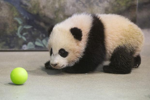 Baby Zoo Animals Tucson Com