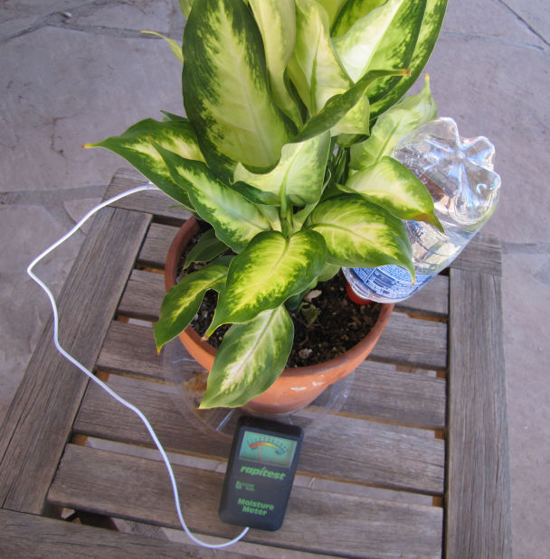 Going on vacation? Keep houseplants healthy while you're away | All on self watering plants on vacation, water while on vacation, watering plants while on vacation, watering house plants on vacation, watering spikes for plastic bottles,