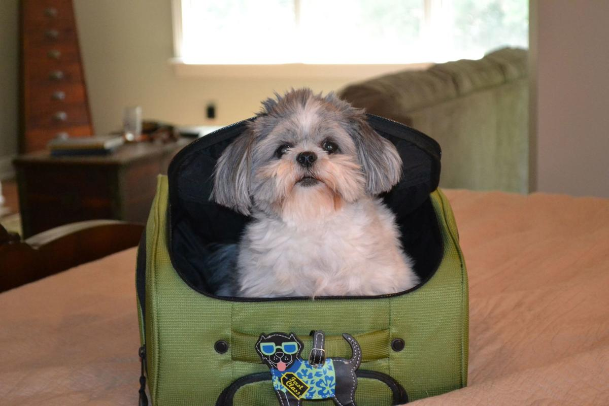 Top 10 Necessities When Moving With Pets (image)