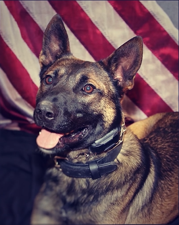 Police dog Diesel