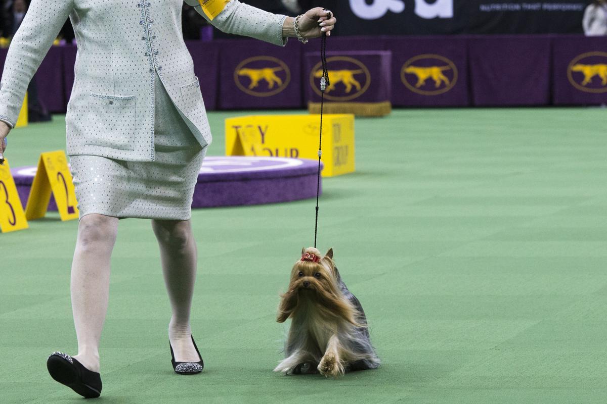 Tucson Kennel Club Dog Show
