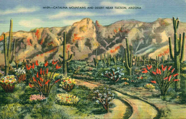 Catalina Mountains and desert
