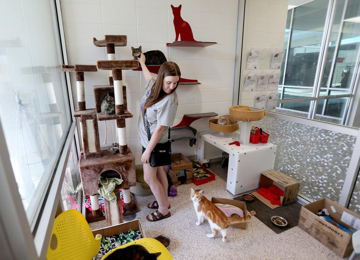 Pima Animal Care Center expansion