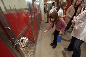 Pima Animal Care Center seeks short-term foster families to combat dog illness