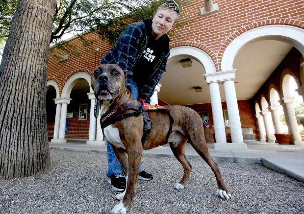 Tucson service pit bull nominated as hero dog