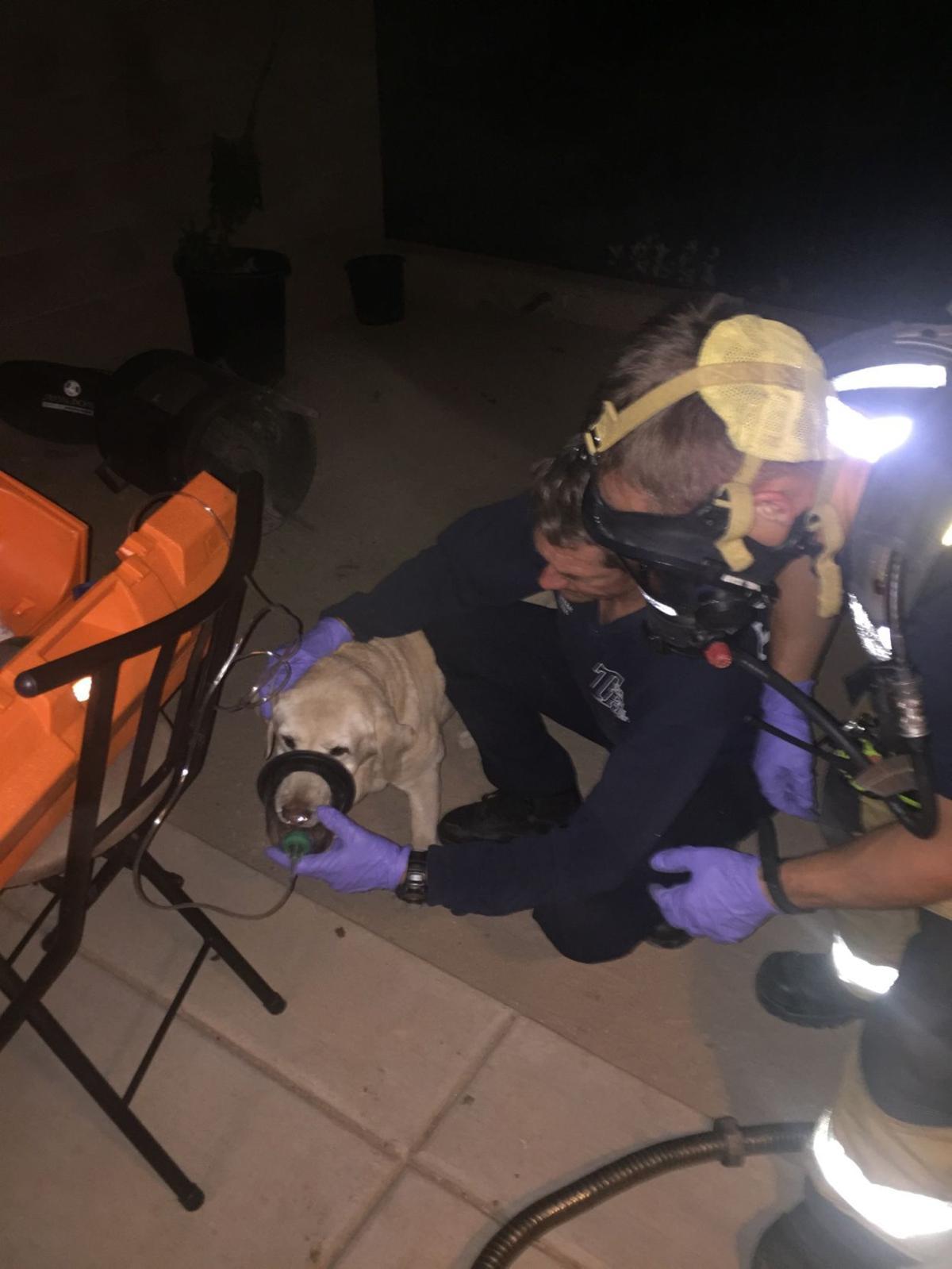 carbon monoxide dog