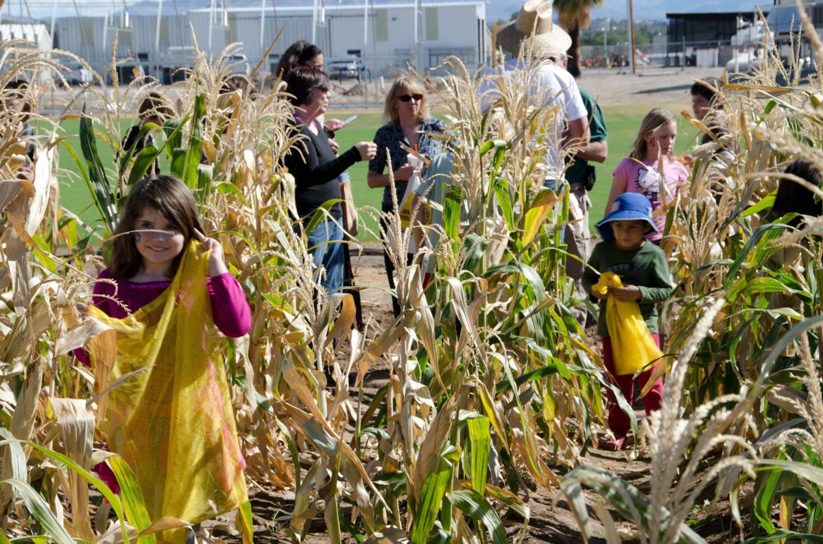 Youths in cornfield